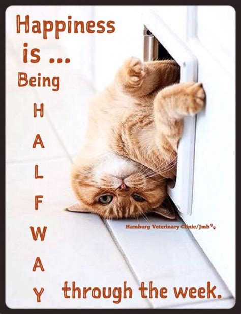 funny wednesday quotes sayings funny wednesday picture