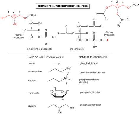 bc  chapter   dynamics  membrane lipids