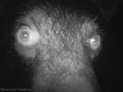 21 animal trail cam photos show what they do when no one