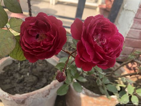 winter flowers  india january vol gardening