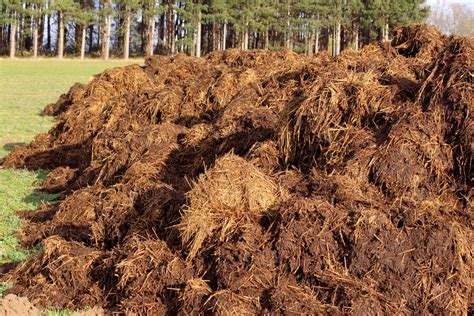Steer Manure In Vegetable Garden 5 Types Of Manure For Your Permaculture Garden