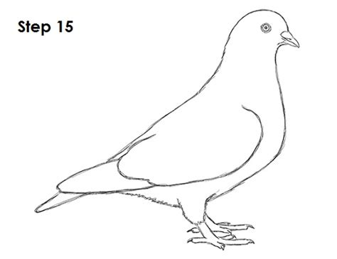 doodle how to make pigeon image gallery pigeon drawing