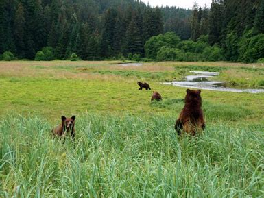 Alaska Supreme Court Search Alaska S Tongass Wilderness Will Remain Says Supreme Court Sustainable