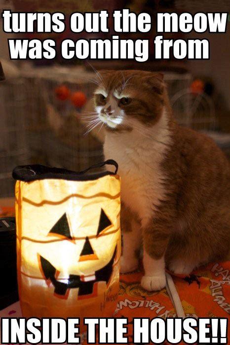 Halloween Cat Meme - kitten tells a scary halloween story