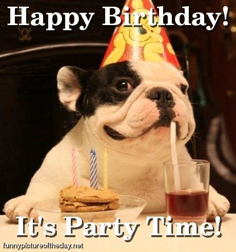 silly happy birthday images happy birthday pictures let s celebrate