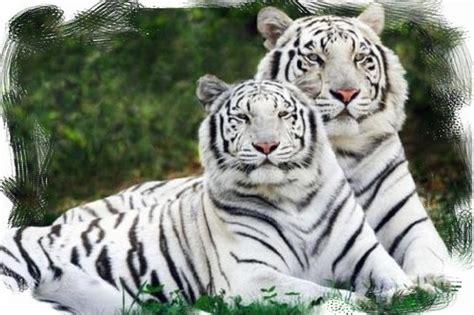 imagenes de animales nuevas especies los animales nos necesitan animales del per 250 en peligro