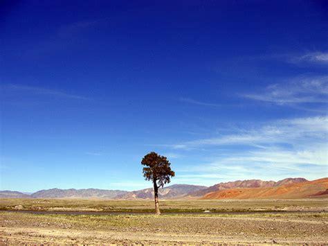 lone tree mongolia landscape flickr photo sharing