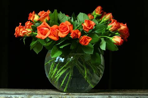 Aspirin In Flower Vases by Flowers And Aspirin Flower Pressflower Press