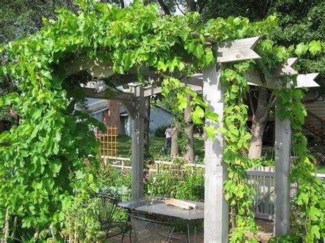 backyard vines 30 fascinating grape arbor ideas the perfect patio decor