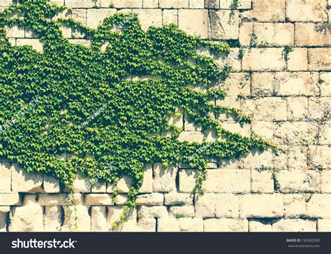ivy and stone home on instagram ivy and stone home on instagram old stone wall with green