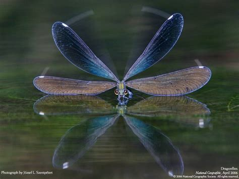 Dragonfly L by Dragonfly Up A Pondering Mind