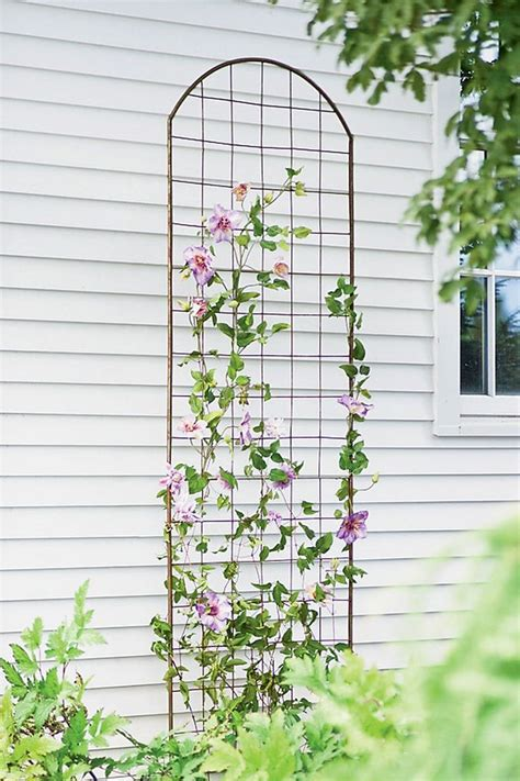 Trellis Suppliers trellis suppliers 28 images triggs trellis supplies pty ltd the australian made 1000 ideas