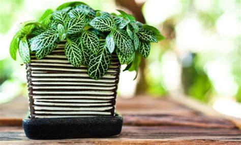 cer fai da te interni piante d appartamento guida per una casa piena di verde