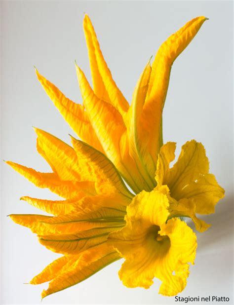 fiori di zucca o zucchina fiori di zucchina ripieni stagioni nel piatto
