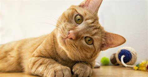 are cats smarter than dogs research reveals cat are smarter than