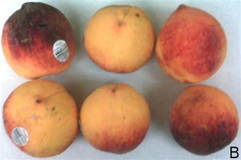 fruit ripening delayed fruit ripening