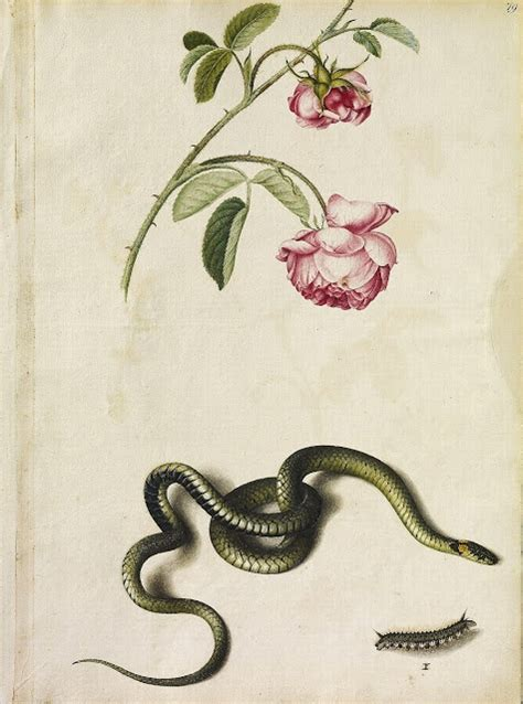 elle belle alexander marshalls botanical illustrations
