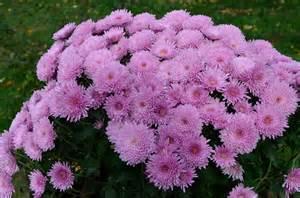 flori de flori de toamnă atitudinea mea