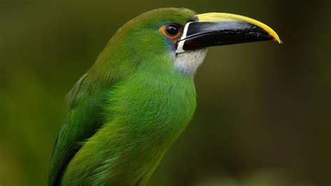 wallpaper green with birds wallpaper bird green bird