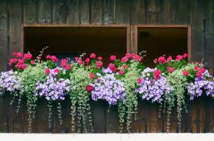 Railing Flower Boxes - 40 window and balcony flower box ideas photos home