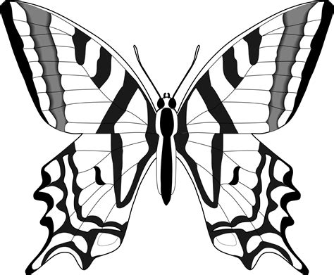 black and white coloring pages of butterflies butterfly clipart black and white clipart panda free