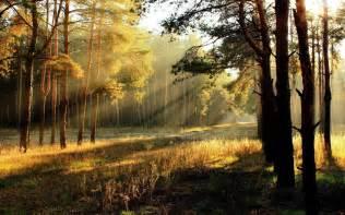 Outdoor Lights Ireland - 清晨阳光风景图片内容 清晨阳光风景图片版面设计