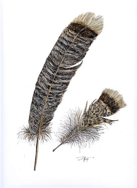 Turkey Feather two turkey feathers by ardys lurtsema