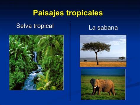 Imagenes De Paisajes De Zonas Climaticas | zonas clim 225 ticas y paisajes