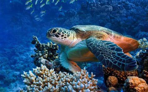 sea turtle live wallpaper free 30 lovable turtle wallpaper for your desktop naldz graphics