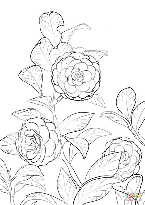 coloring pages japanese flowers japanese flower pages coloring pages