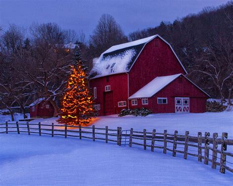 christmas trees in ct a connecticut photograph by vose