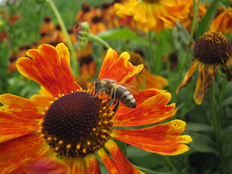Garten Deko Paradies by Diese 7 Pflanzen Sind Ein Paradies F 252 R Bienen Garten