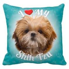 shih tzu grooming pillow how to groom your shih tzu in a fluffy legs hairstyle for