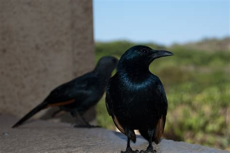 diseases caused by pest birds bird deterrent specialists