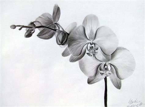 orchid by zeroxy92 drawing lessons pinterest