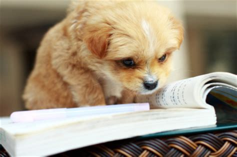 pup things that go pup to learn books puppy reading