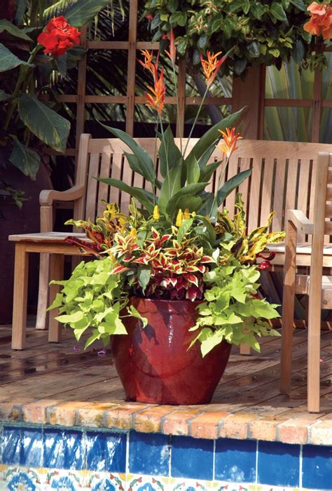 florida container gardening 17 best ideas about gardens on small