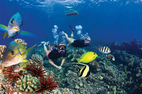 big island catamaran snorkel finding the best snorkeling in maui for families