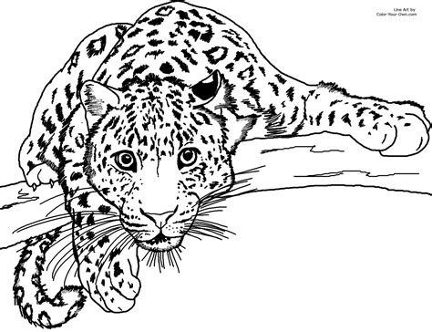pics to color unique leopard page to color collection printable