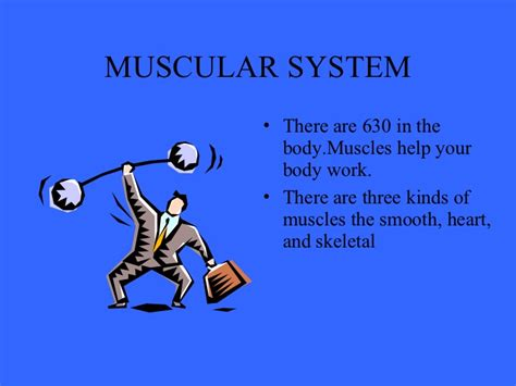 A Tour Of Your Muscular And Skeletal Systems muscular skeletal system