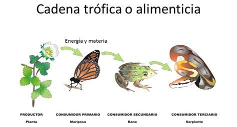 cadenas troficas en ecosistemas ecolog 237 a y medio ambiente cadena tr 211 fica o cadena alimentaria