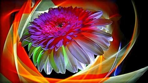 wallpaper abstract colorful flower free backgrounds colorful abstract flower hd desktop