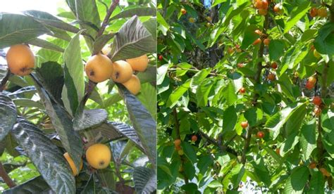 fruit trees in spain riverfront villa grounds gardens swimming pool