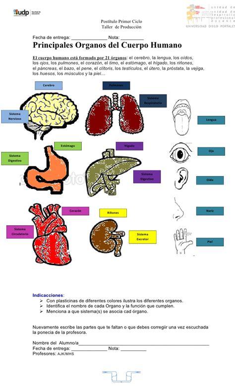 imagenes asombrosas del cuerpo humano cuerpo humano