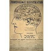 Anorak  The World Of Phrenology In Photos