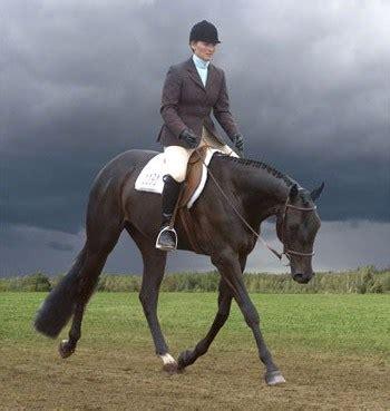 hunt seat saddle hunt seat horseback