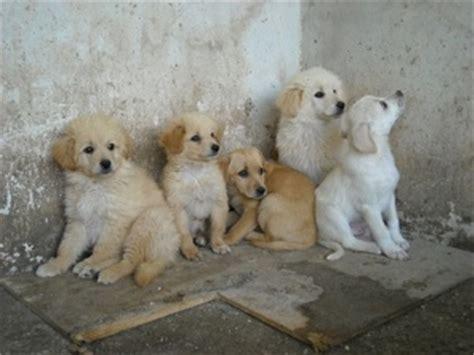 comune di lanciano ufficio tributi avviso adozione cani randagi comune di sant agata di