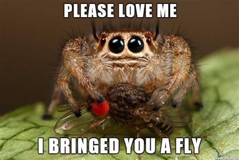 Friendly Spider Memes Image Memes - octokitten seeks nom friend for tooth hugs the funky