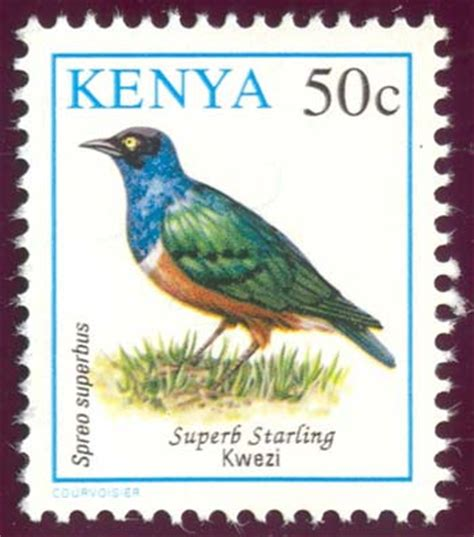 50 top birding in kenya books somests