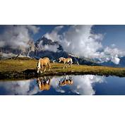 Beautiful Horse Reflection HD Wallpaper 59329 1920x1080 Px